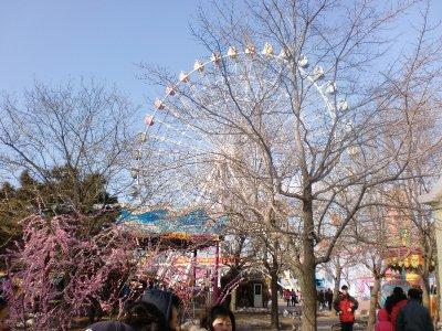 farris wheel at amusement park