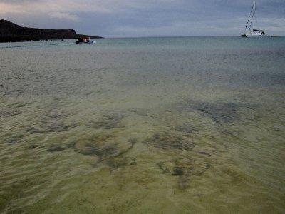 Wet landing onto stingrays at Isla Floreana