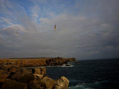 Albatross in flight, Espanola island