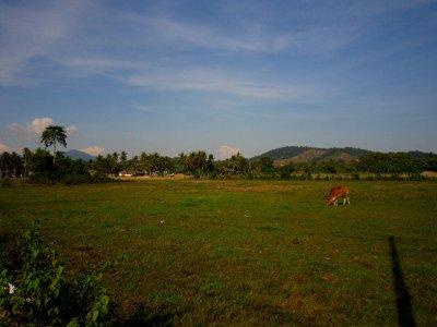 Fields around my bungalow
