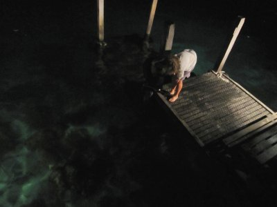 Looking for the lionfish under spot light