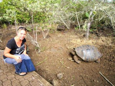 Giant tortoise, San Cristobel