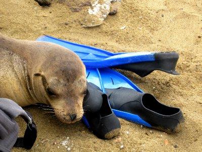 Oiiiiiii they are my flippers not a pillow