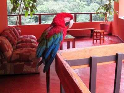 I was greeted by a parrot at the hostel at Agues Calientes