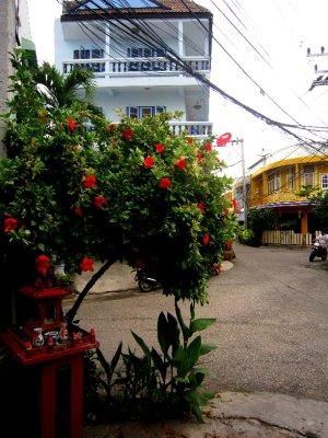 Pretty Chiang Mai