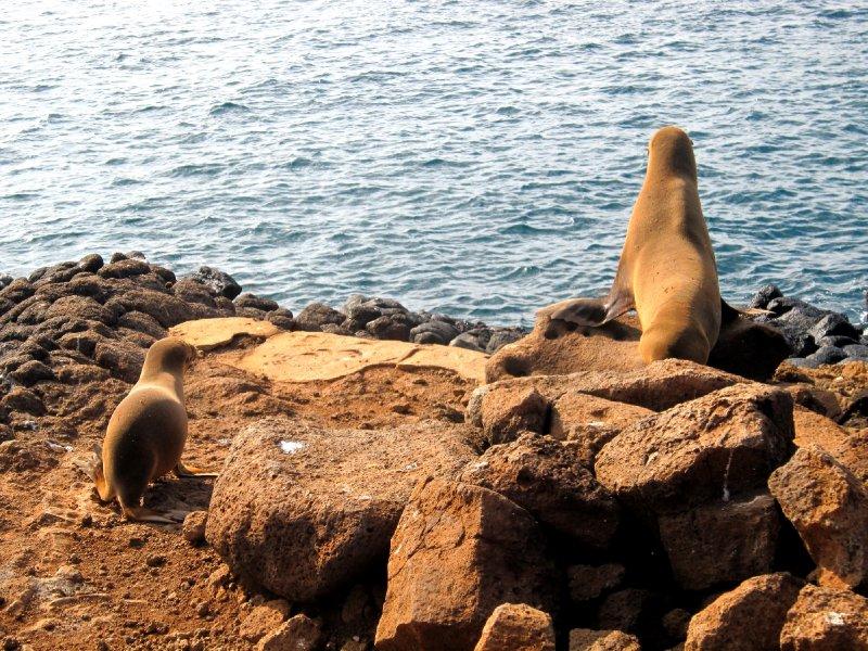 Seymor Island