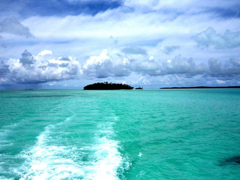 Tiger or Shark island
