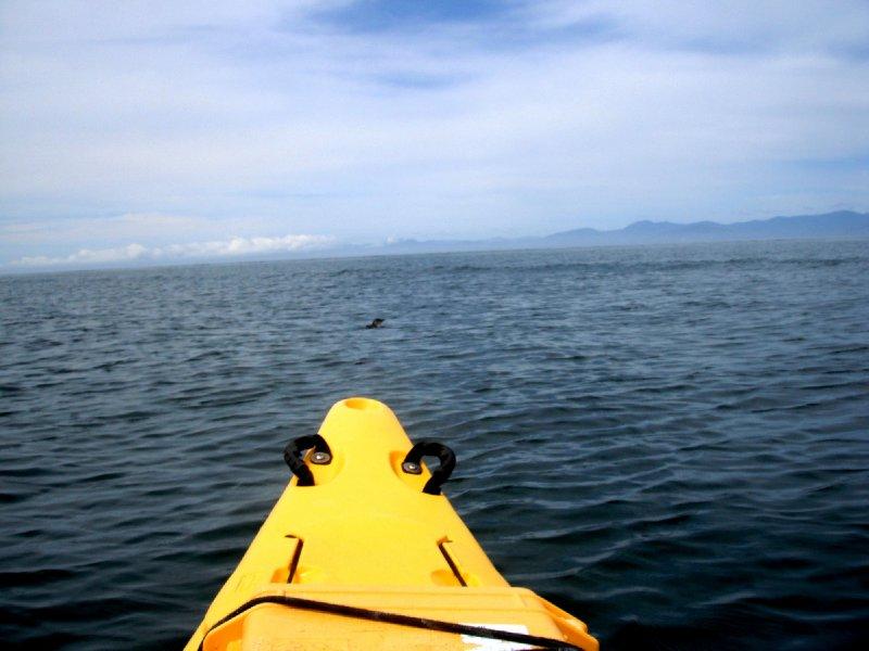 Abel Tasman kayaking with blue penguins