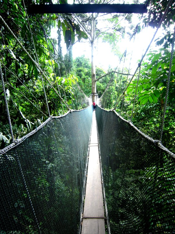 The scary canopy walk