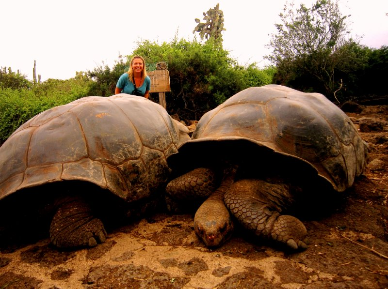 What a huge pair! Charles Darwin Research Station, Santa Cruz