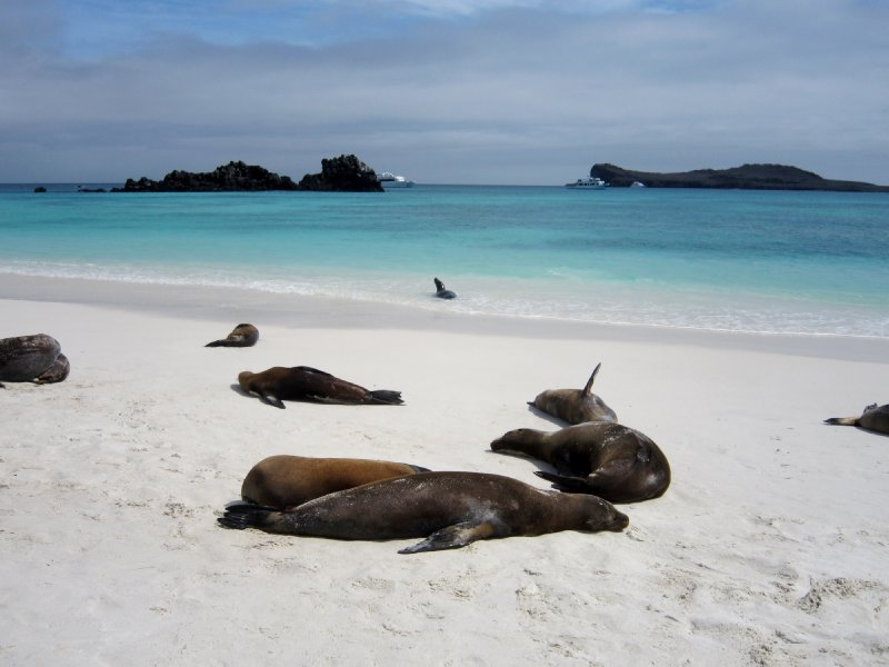 Espanola island, if I was a sealion this is where i think i would hang out!