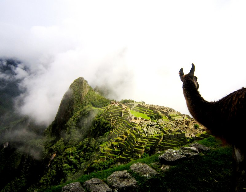 Watching Machu Picchu appear through the clouds with my llama friend