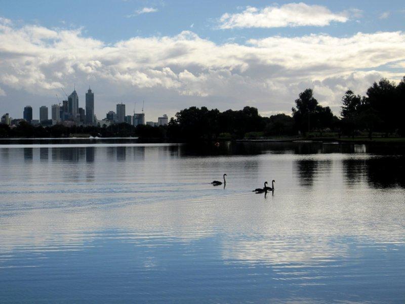 Ahhh yes I didn't imagine seeing black swans!
