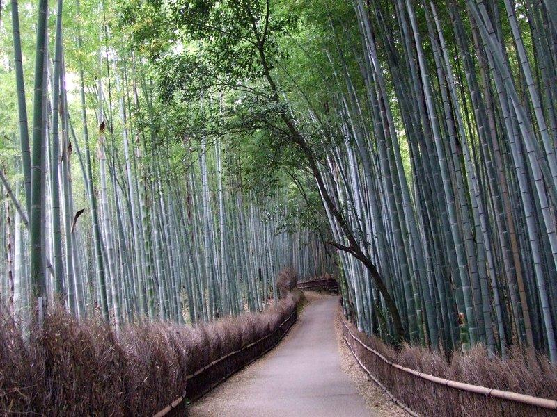walking through bamboooo