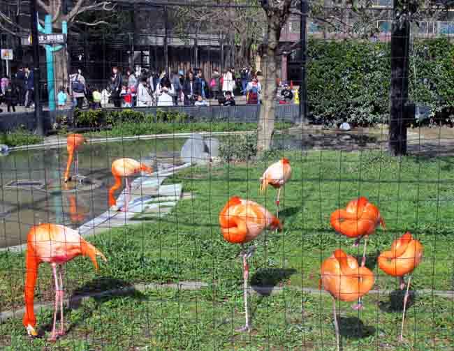 Tokyo Ueno Park