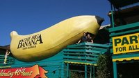 Coffs Harbour Big Banana