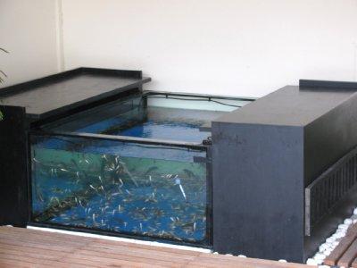 Pedicure Fish Tank