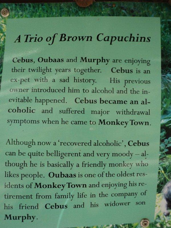 alch monkey
