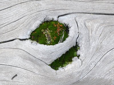 Life sprouts on dead wood