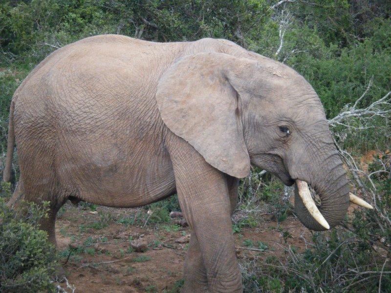amazing elephant in the wild