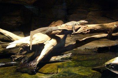 #9 National Aquarium Sunbathing