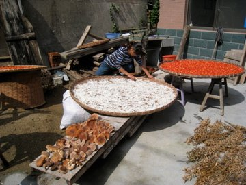 drying the harvest ping kung