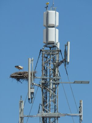 Stork's nest in a radio tower