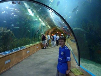 In the Oceanografic
