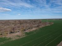 2020 Aug 3 Wheat field