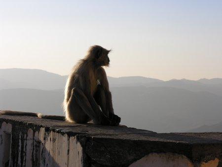 Monkey enjoying the sunset