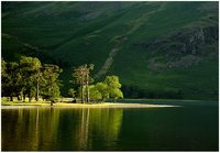 The trees of Lake Buttermere