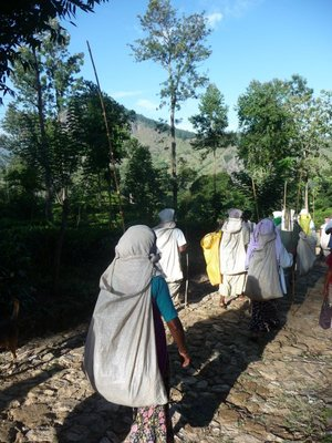 Tea pickers making their way to work