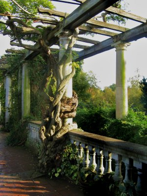 Pergola, West Heath