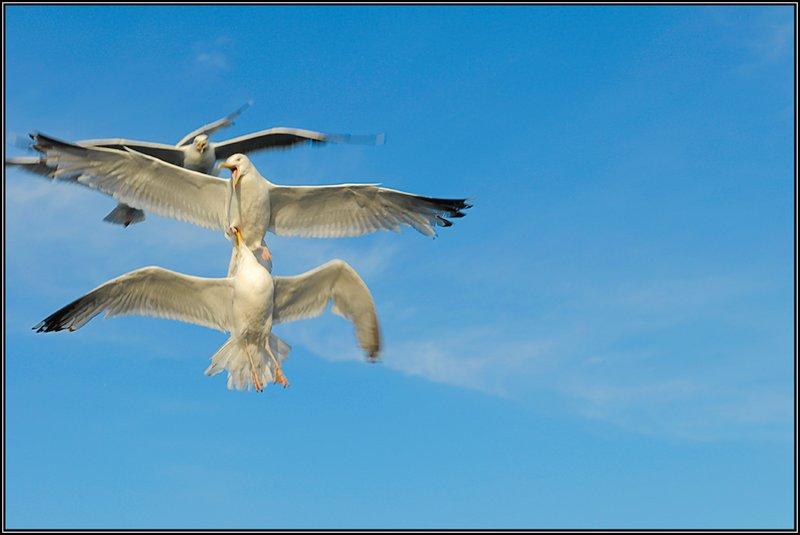 flight fight