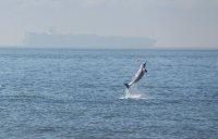 Delfin Bribie Island