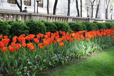 Flowers outside NYC library
