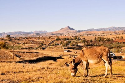 Lesotho View with Donkey