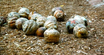 2012_FWF_Coconut_05.jpg