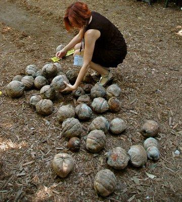 2012_FWF_Coconut_17.jpg