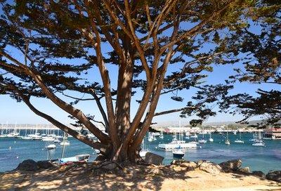 2014_MontereyScene_17.jpg