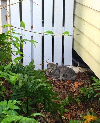 2015_Xmas_KW_cat_17.jpg