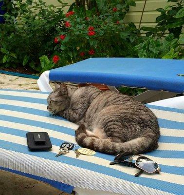 2015_Xmas_KW_cat_19.jpg