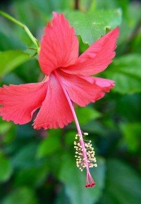 2016_Aug_AXA_floral_-_1.jpg