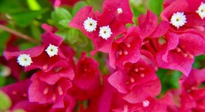 2016_Aug_AXA_floral_-_3.jpg