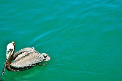 Longboat2012_Salty06.jpg