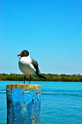 Longboat2012_Salty09.jpg