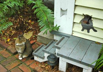 kittyhole.jpg