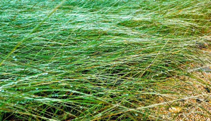 large_2011_AXA_GrassCrop_1.jpg