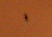 Abaco_SpiderShot_1.jpg