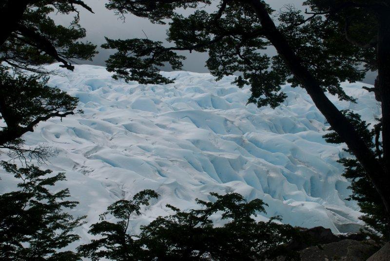 Glimpse of the glacier through the trees